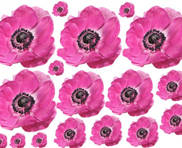 Wandsticker Anemonen Set